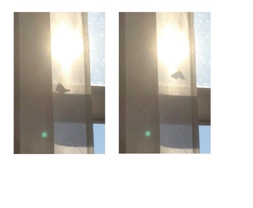 http://natasharijkhoff.com/files/gimgs/th-5_Schermafbeelding 2019-05-31 om 21_54_10.jpg